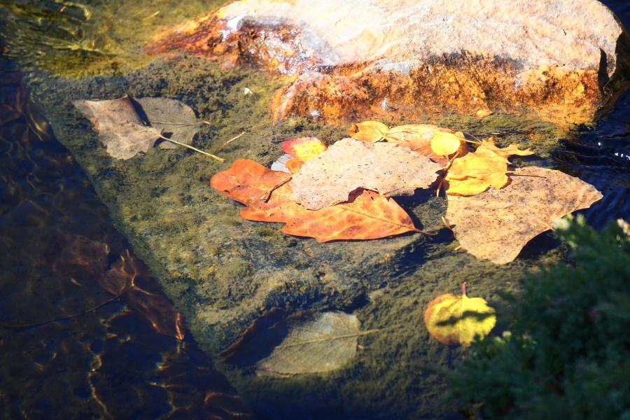 00-Fall-Leaves-Water-DSC03651_900