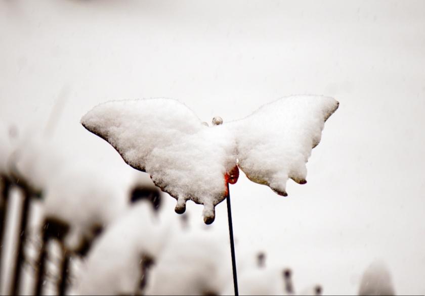 00-snowbutterfly-DSC04128_a900