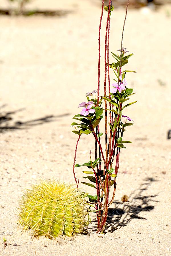 00-desertsand-Cabo-dsc04869_3A900