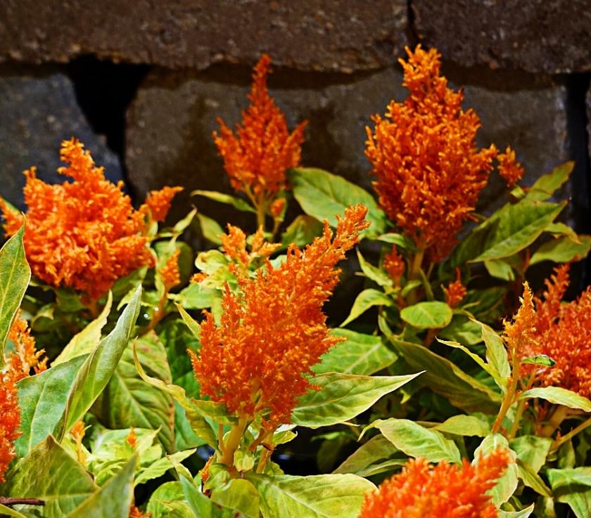 00-orange-floral-DSC04667_A900