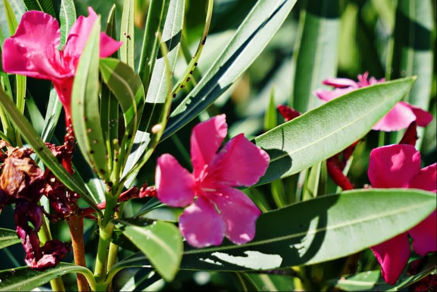 00-pinktropical-DSC04866_A900