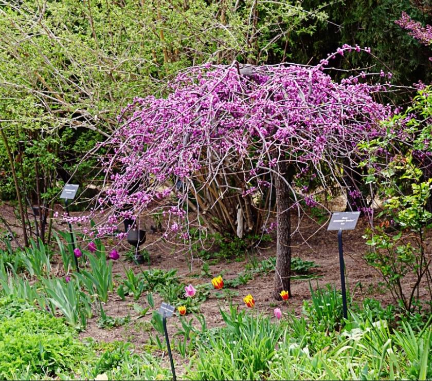 00-Spring-Tree-DSC05344_A900
