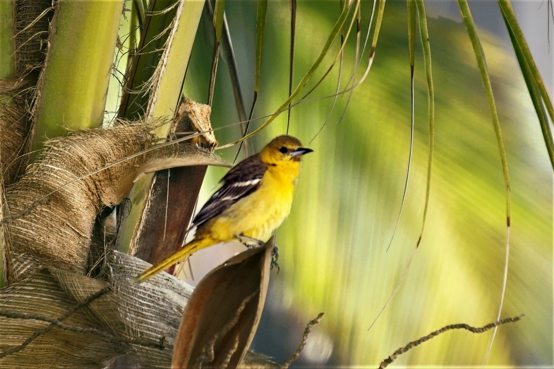 01-bird-dsc04962_40362701335_o