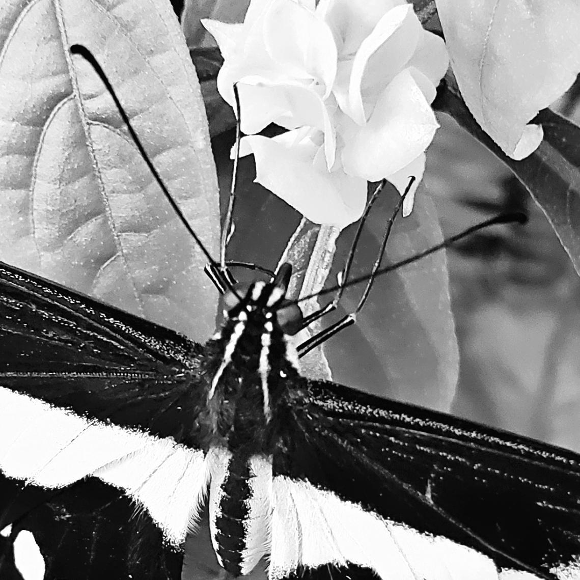 00-butterfly-5-20180429_142909_Mmacro