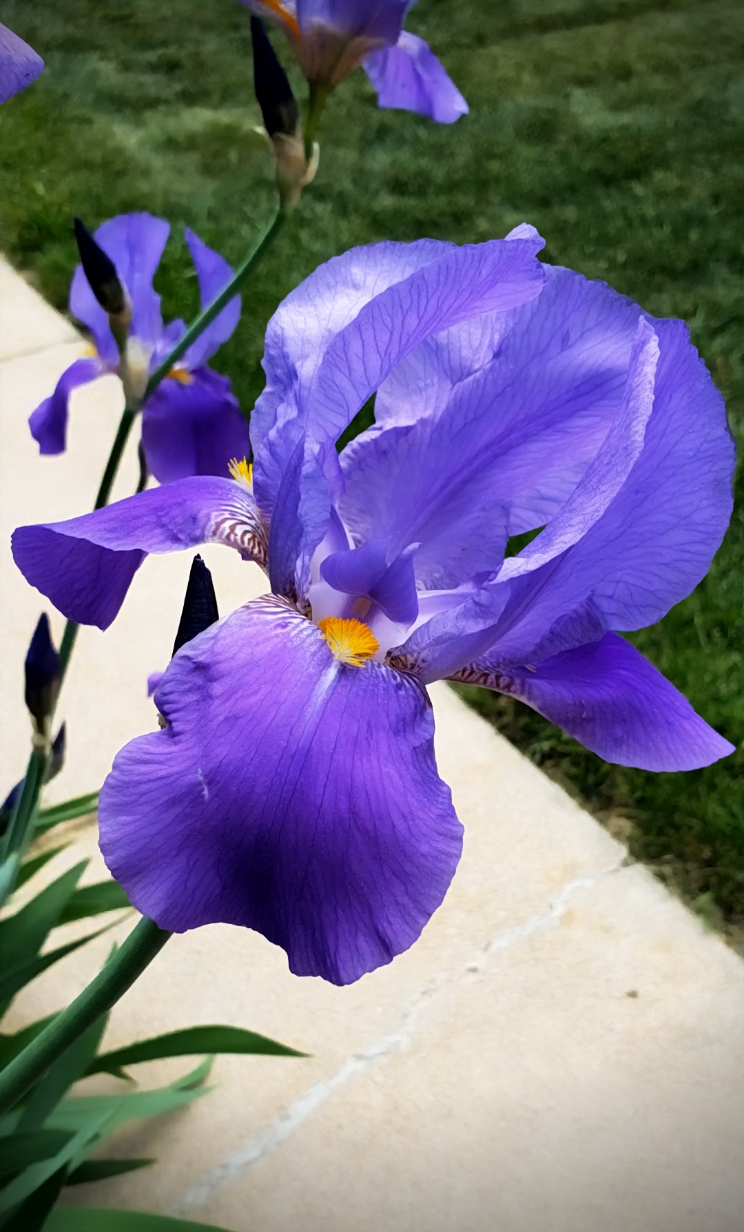 00-iris-blue-20180523_162233_captureA