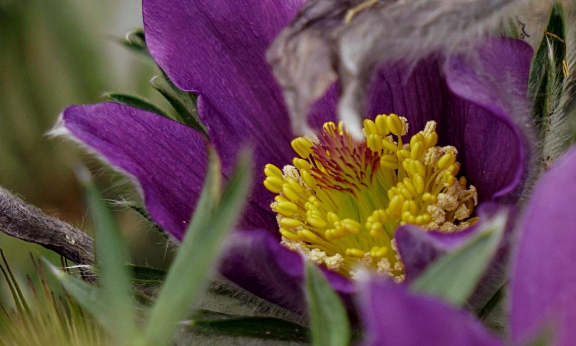 00-purplefuzzies-DSC05322A
