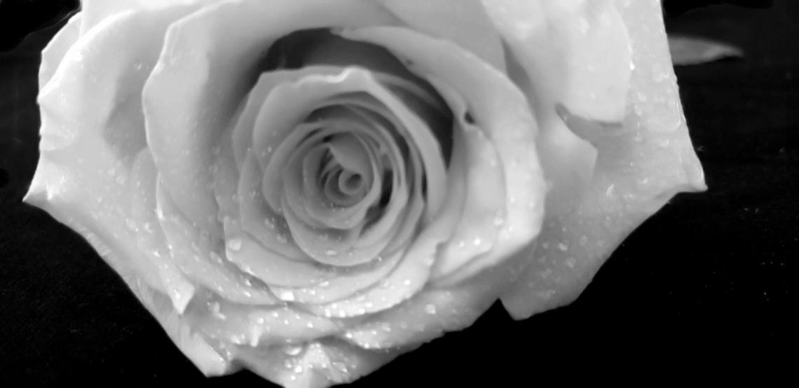 00-Rose-Red-05092018M