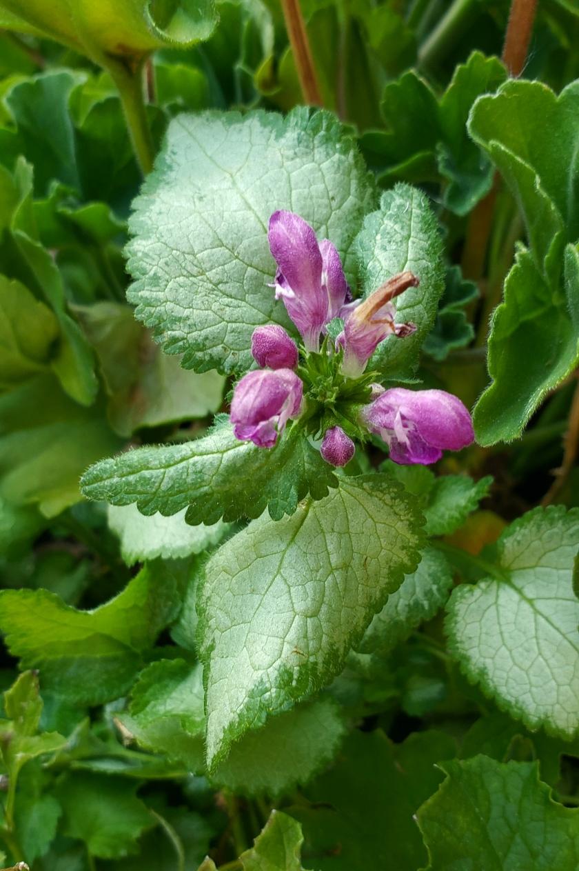 00-06112018-purpleflower