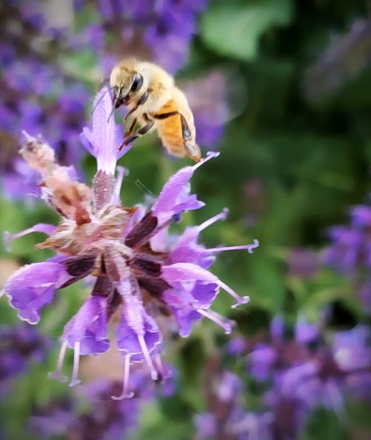 00-Bee-20180602_182714_captureA900