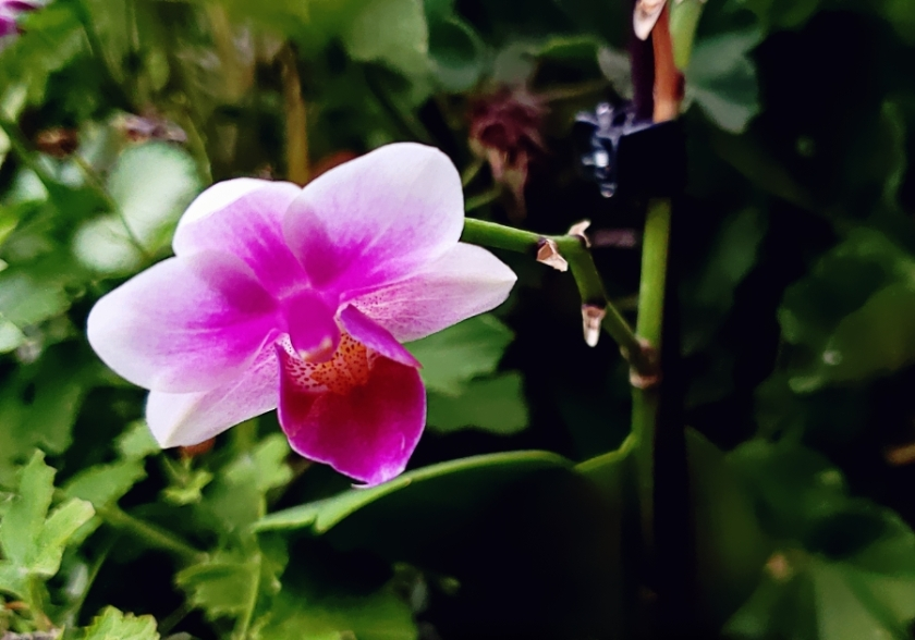 00-Orchid-42601707902_A900