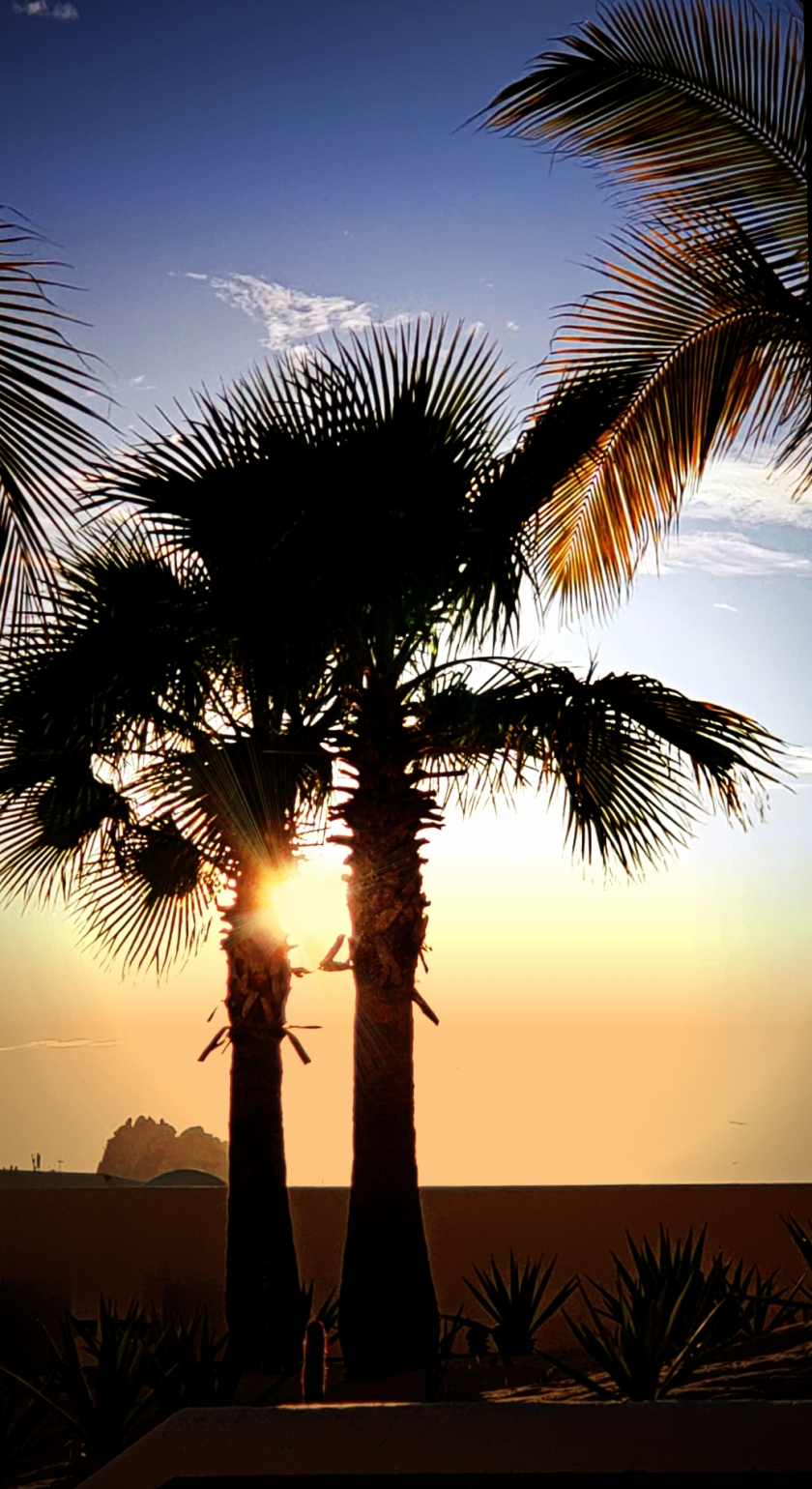 00-palmtrees-cabo-backlit-20180401_184503_A