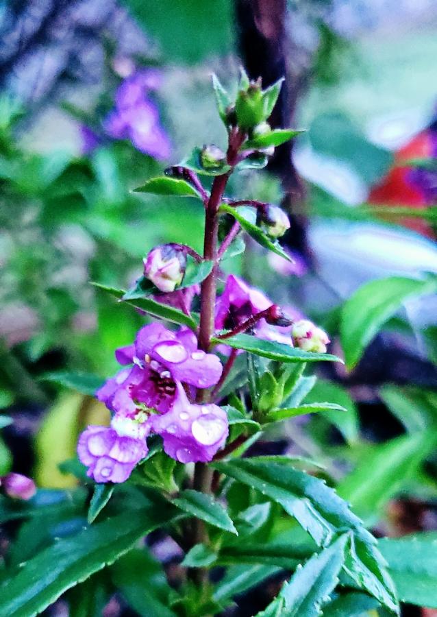 00-purpleflower-40914925510_A900