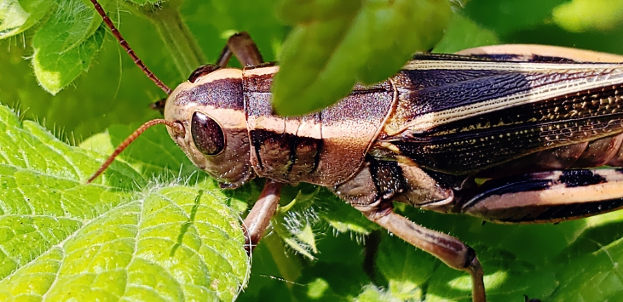 00-grasshopper-20180729_105607A900