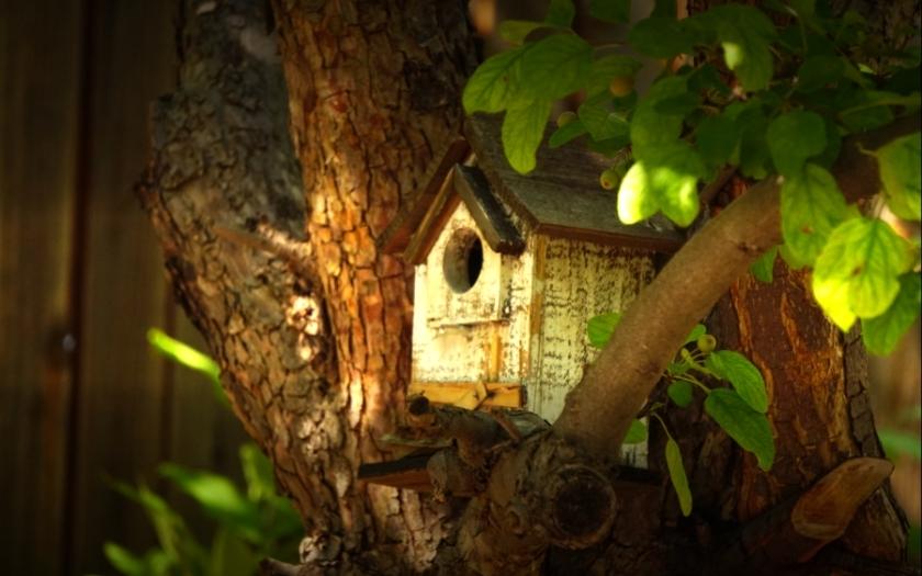 00-birdhouse-DSC06276_A900