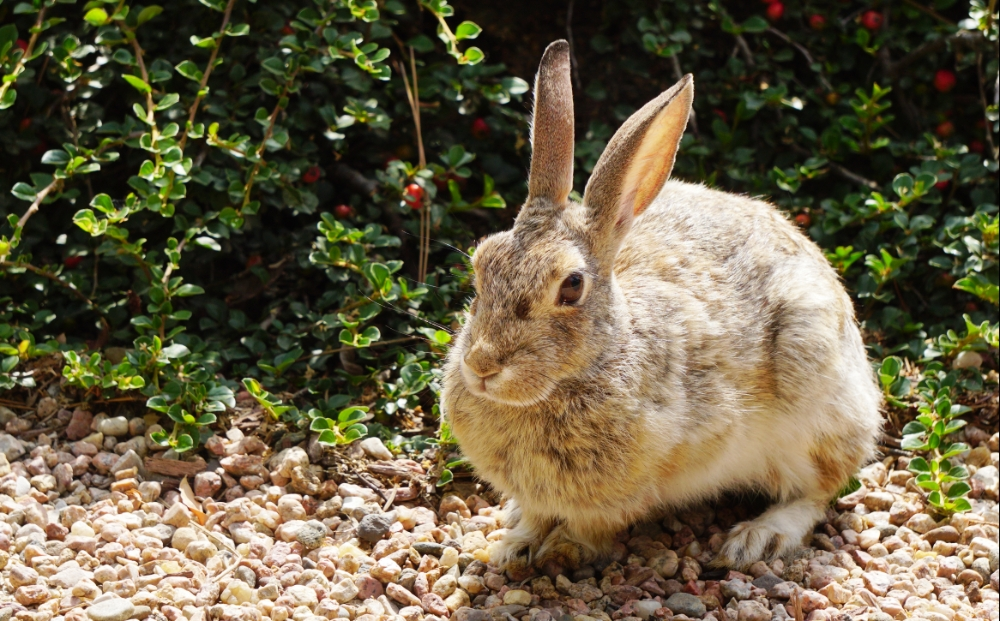 00-bunnyDSC06396_A1000