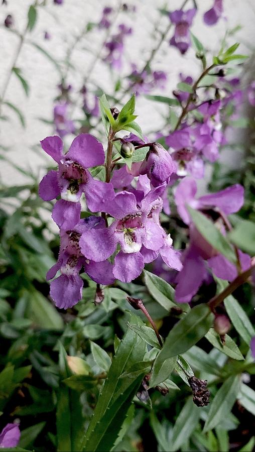 00-flowerbasket-purple-20180815_A1900